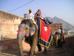 Parques nacionales en India - elefantes